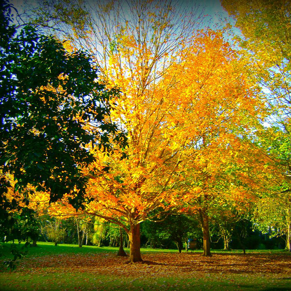 Paisaje O4 Yellow Tree by stylefashion