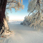 Paisaje 13 Snow