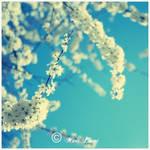 Floraison by MarcoPhotos
