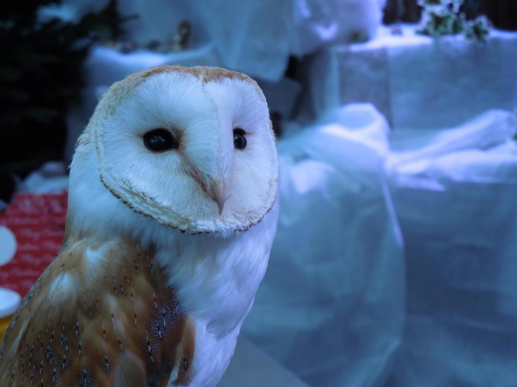 Owl by xLaRiex