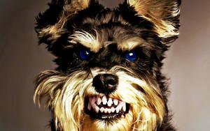 Angry Dog (Photoshopped) by KimmiPandaa