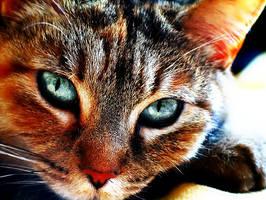 Cat (Photoshopped) by KimmiPandaa