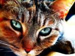 Cat (Photoshopped)