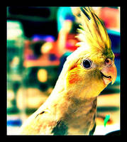 Parrot Baby (Photoshopped) by KimmiPandaa