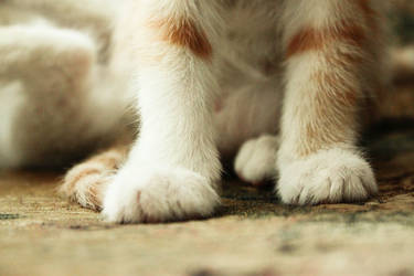 paws by plateson