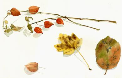 Di alchechengi e foglie