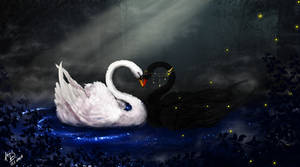 Swan's Love