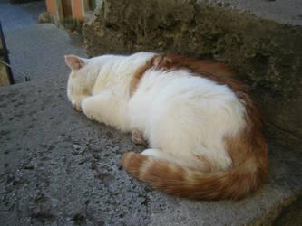 Siesta Cat by xxRomanoForeverxx