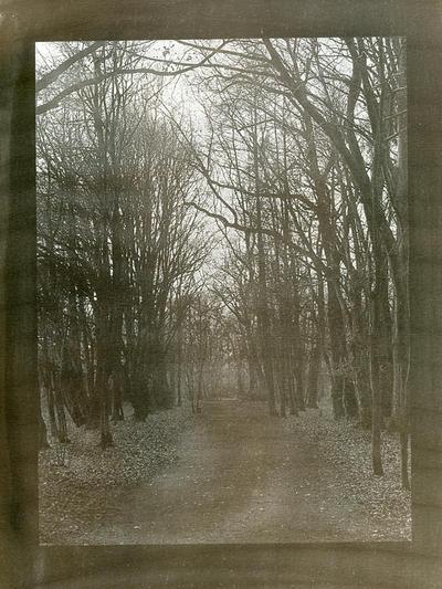 Path - Van Dyke Brown by no-purgatory