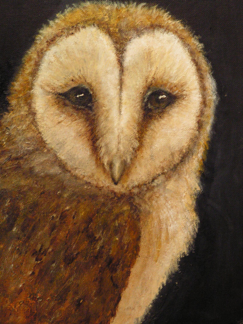 barn owl, final ... by dlockett2