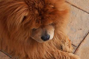 I'm a scary lion....roar by aelvi