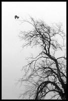 black bird by inyourhair