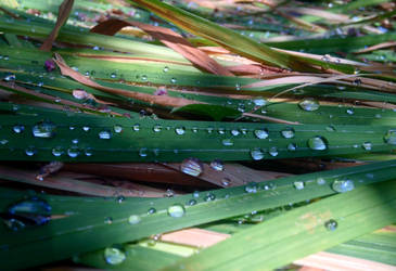 Dew in the morning by bluebecauseIcan