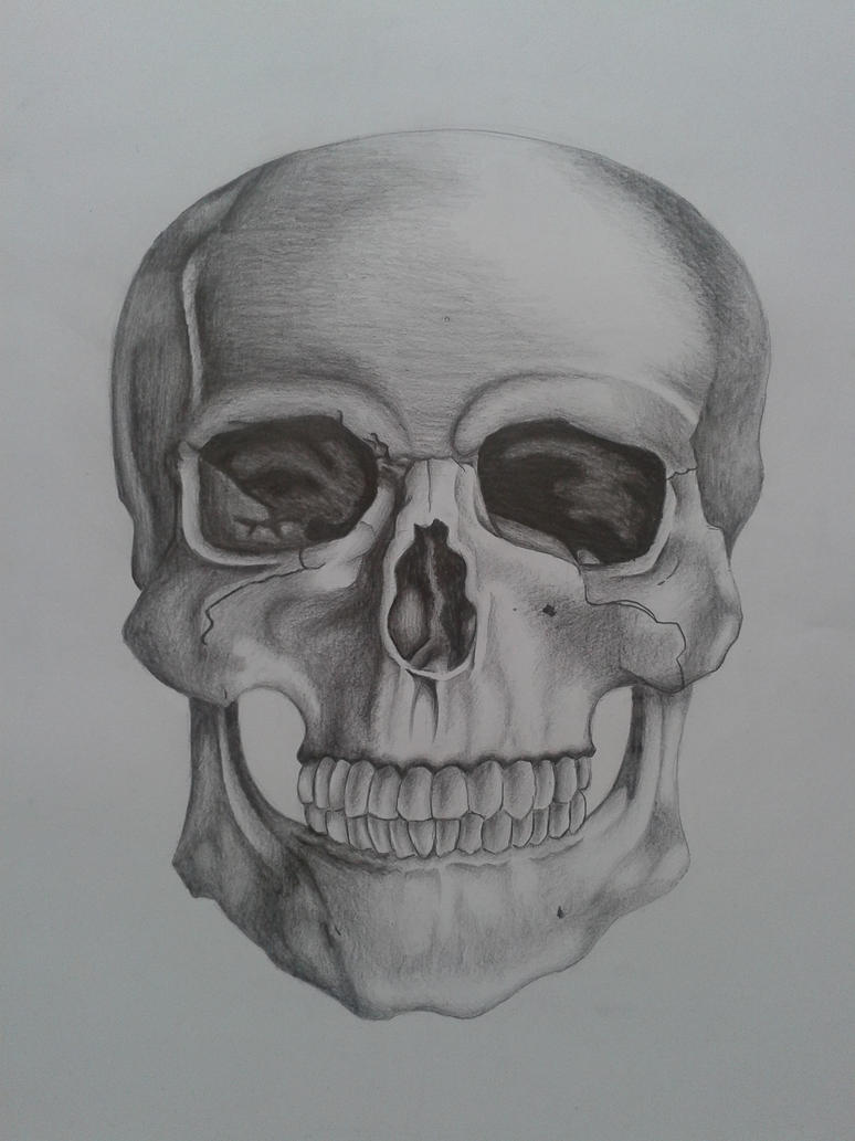 Skull-drawing again by Dominica1
