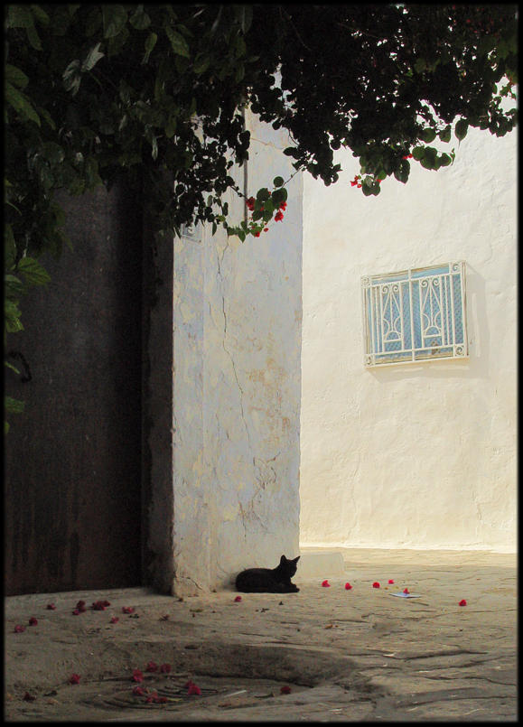 ..Siesta.. by lectral