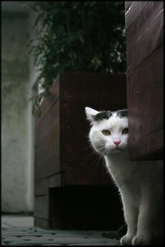 ..Kit Kat.. by lectral