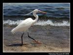 Passeggiando in riva al mare