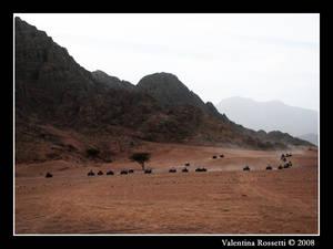 Quad in the desert