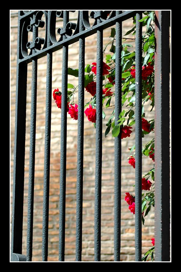 Roses gate