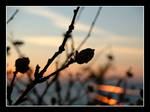 Rest on sunset