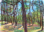 Cape Cod Forest