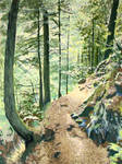 Path in Slovak Paradise