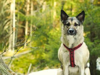 Dog model 2014 by game-flea
