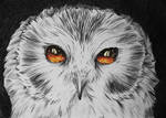 The Owls Are Not What They Seem - #2