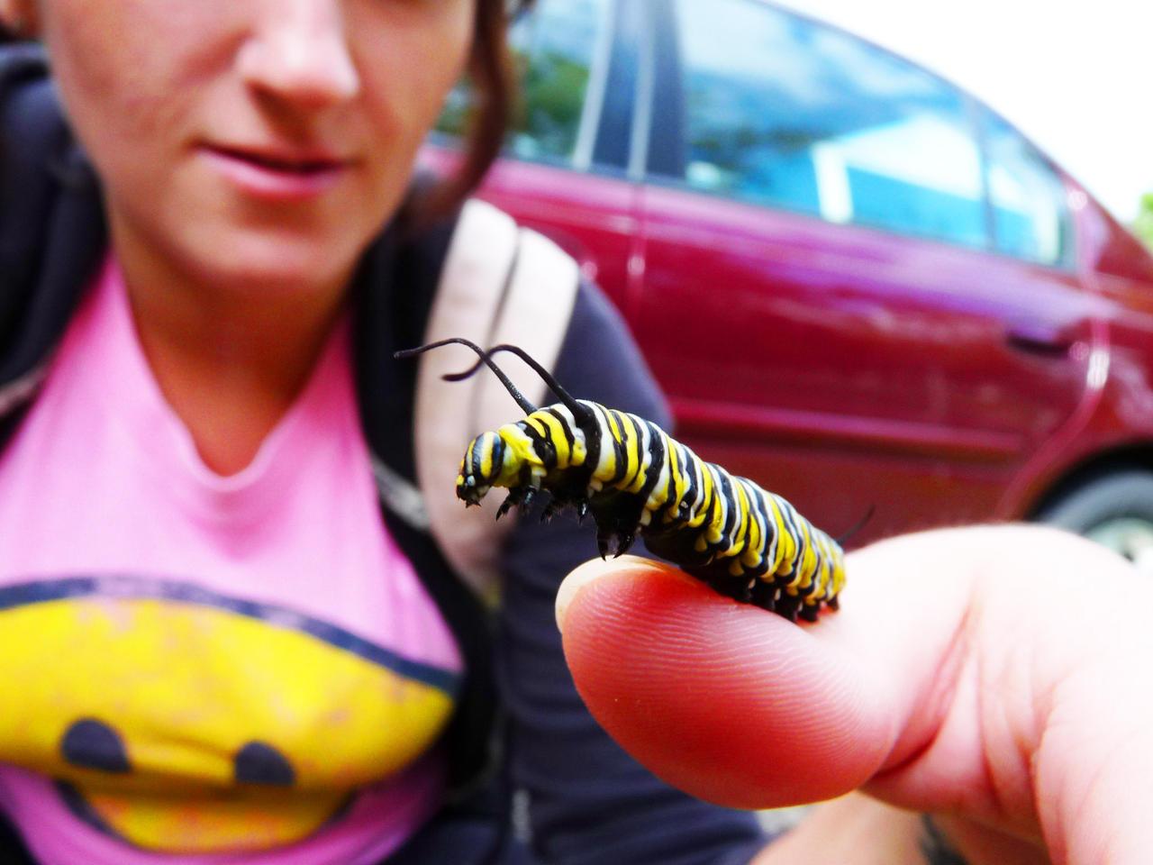 Krista and the Caterpillar by JeremiahLambertArt