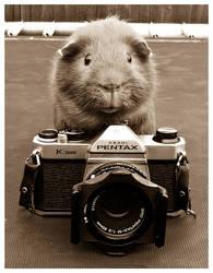 Guinea Photography