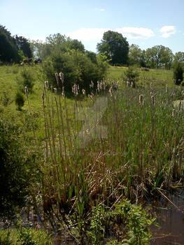 My Grandfather's Pond 3