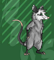 North American Marsupial by Killer-Kame