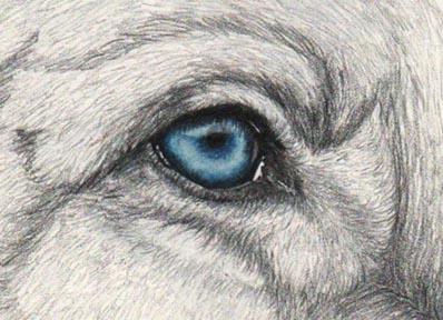 AlbusaumLupus's Profile Picture