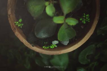 Tiny creatures by Aloony89