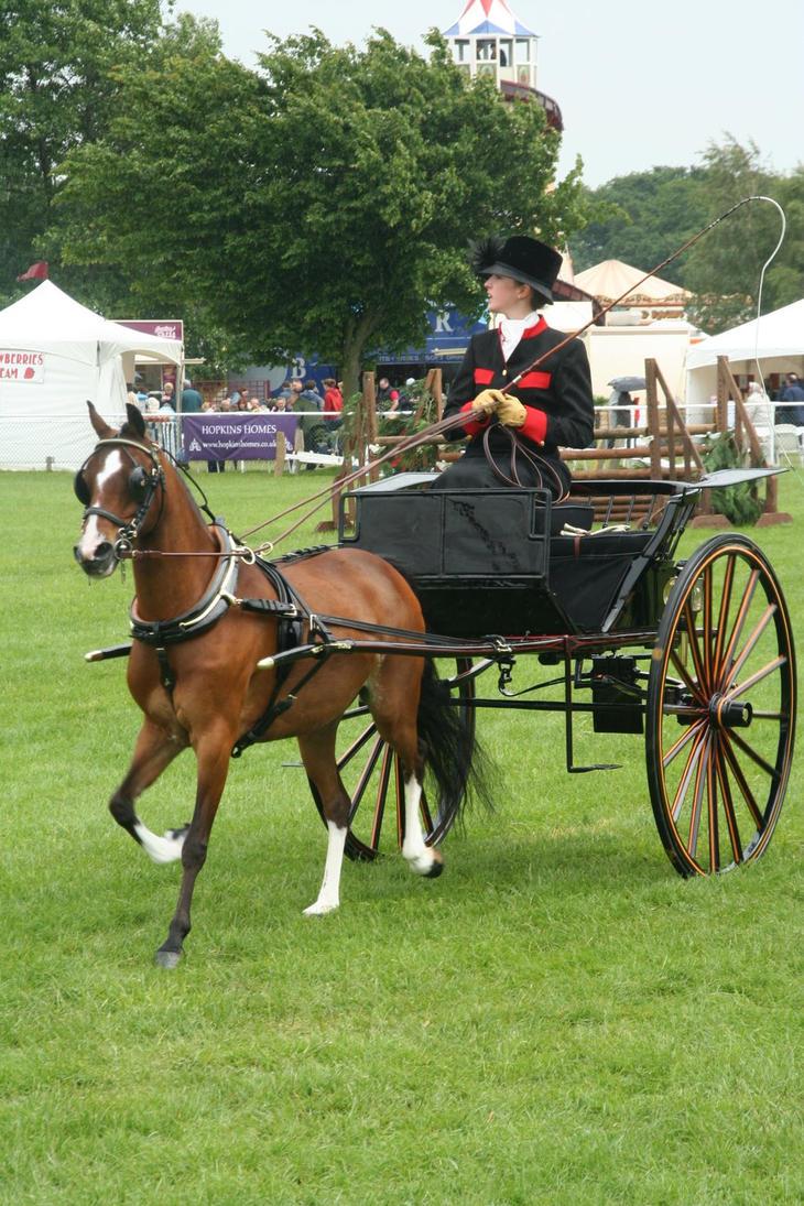 http://pre07.deviantart.net/e2c3/th/pre/f/2007/153/9/d/miniature_horse_and_gig_by_fuzzy_raspberry.jpg