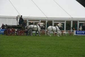 Triple Carriage 2 by fuzzy-raspberry