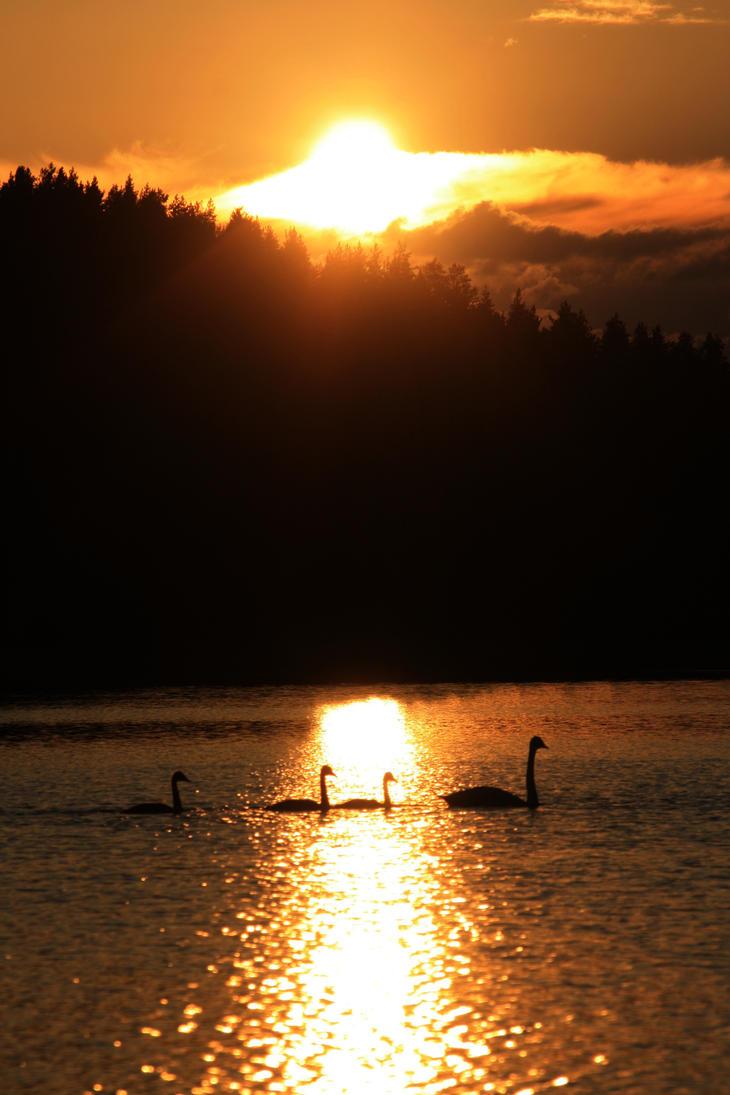 Swans by Cynadeisum