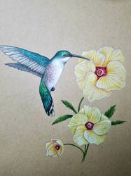 humming bird by jptn02