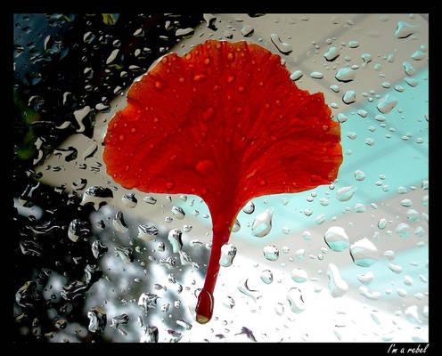 Raindrops on....