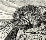 ROOTS IN THE ROCKS, BRANCHES IN THE SKY