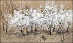 A WHITE CLOUD OF SPRING (EN-PLEIN-AIR SKETCH) by Badusev