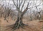 OLD BEECH TREE ON ELHAM-KAYA'S MOUNTAINSIDE