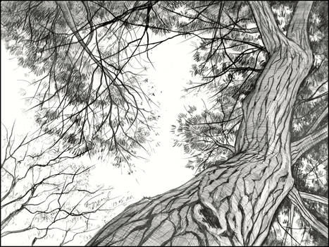 UNDER THE CROWN OF A STONE PINE