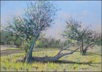WILLOWS IN THE MEADOW (EN-PLEIN-AIR SKETCH)