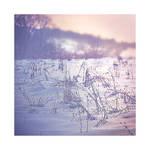 Winter mood by nellusatko