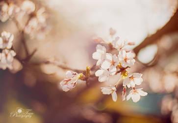 Spring 2014 by nellusatko