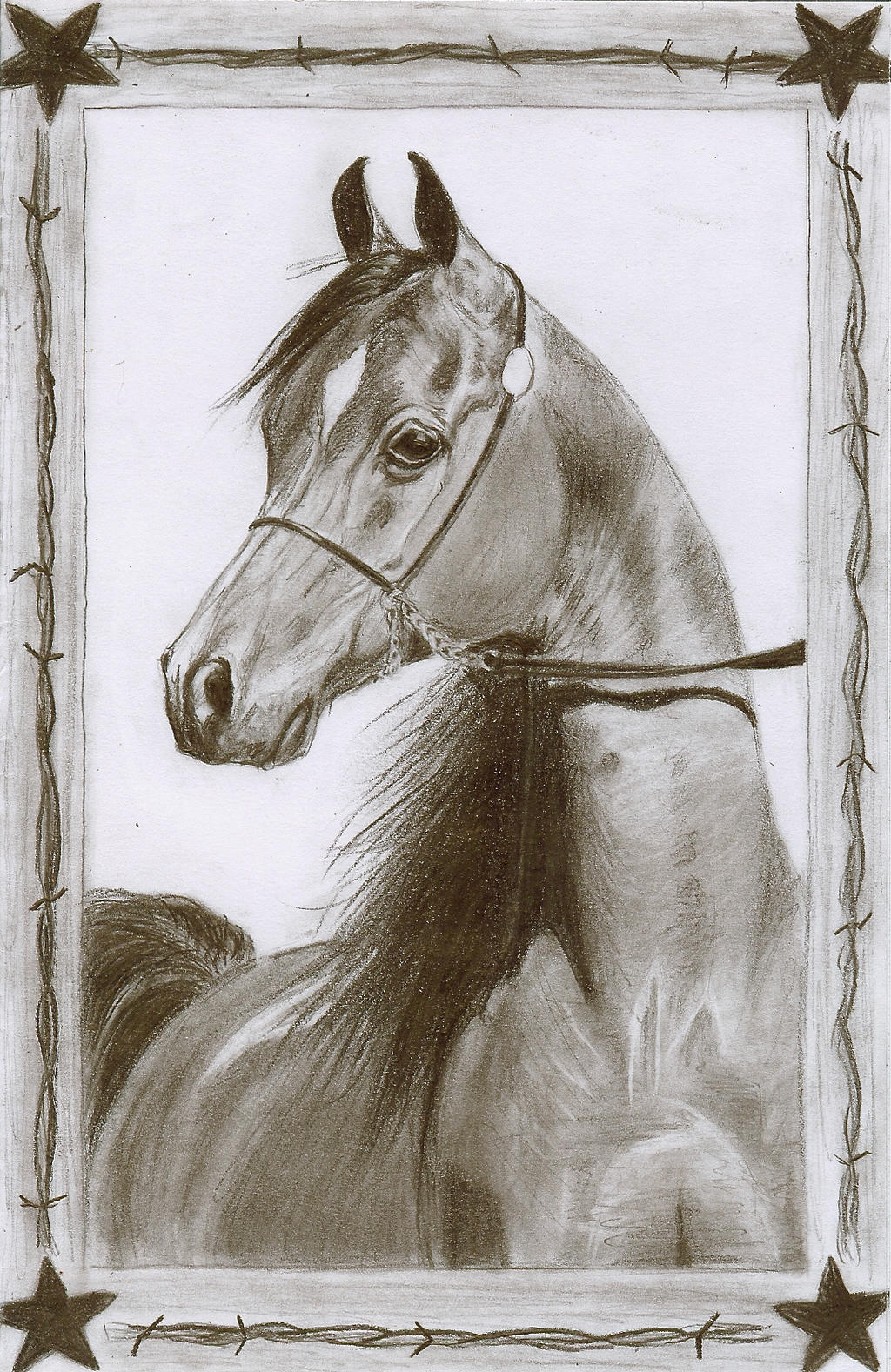 Arabian Horse Pencil Drawing By Christiancowgirl116 Arabian Horse Pencil  Drawing By Christiancowgirl116