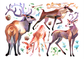 deers by mariposa-nocturna