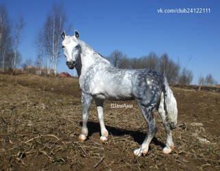 Orlovsky Trotter mare by ElizavetaGorojankina