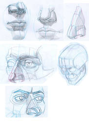 Head Study 3